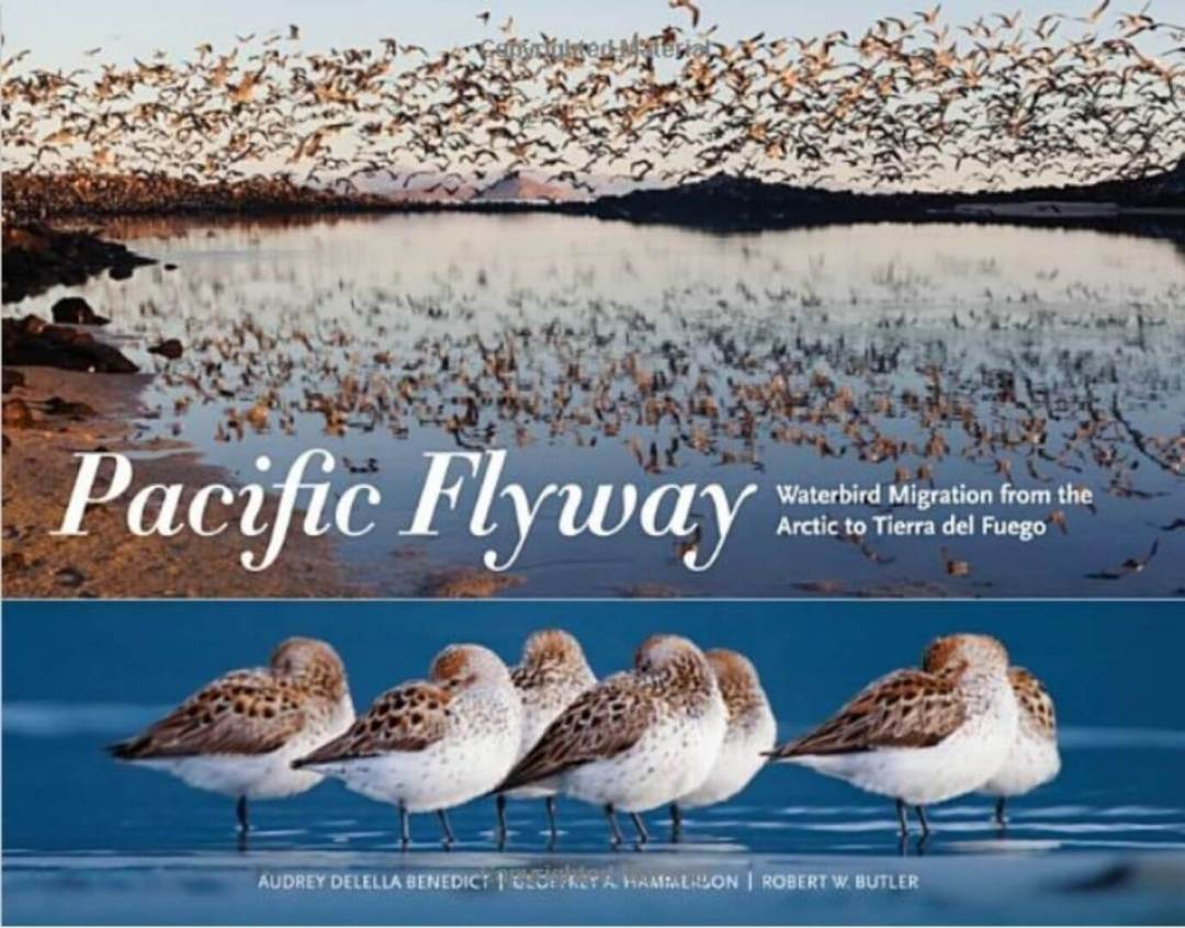 pacific flyway book cover