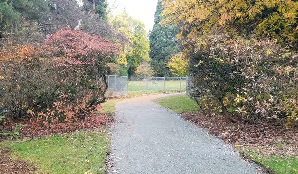 A gravel path cuts between two large bushes before passing a chainlink fence