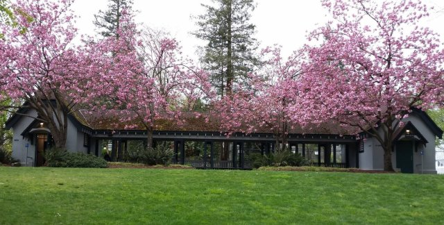 building with central breezeway shown at top of lawn, with pink-flowering trees in front.