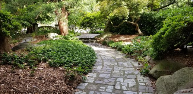stone pave path through woodland garden