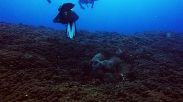 Clip 21: Coral field with patch of Radianthus Anemone. Dive site: Shark North
