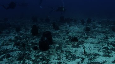 Clip 34: Giant Barrel Sponges. Dive site: Nearby Big T-Wall
