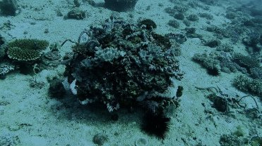 Clip 43: Coral formation with hard and soft corals. Dive site: Big T-Wall