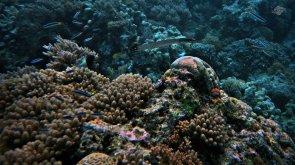 Zanzibar Reef 1366 x 768