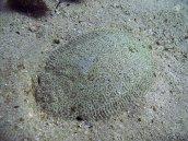 Flounder 1024 x 768