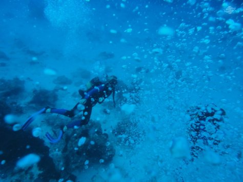 Scuba Diving in Zanzibar 1024 x 768