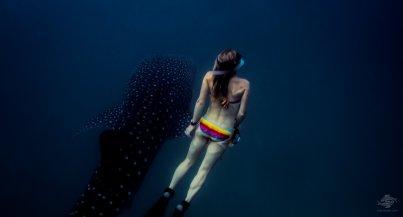 whale sharks mafia island
