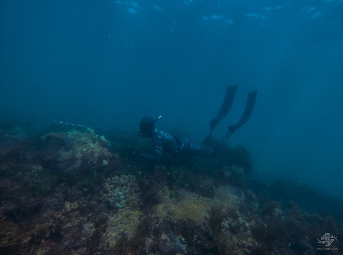 scuba diving spearfishing