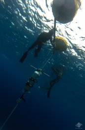 freediving scuba diving dahab