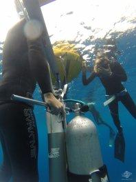 freediving scuba diving dahab