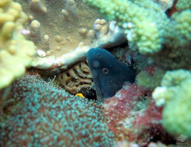 scuba diving dar es salaam octupus reef Tanzania East Africa