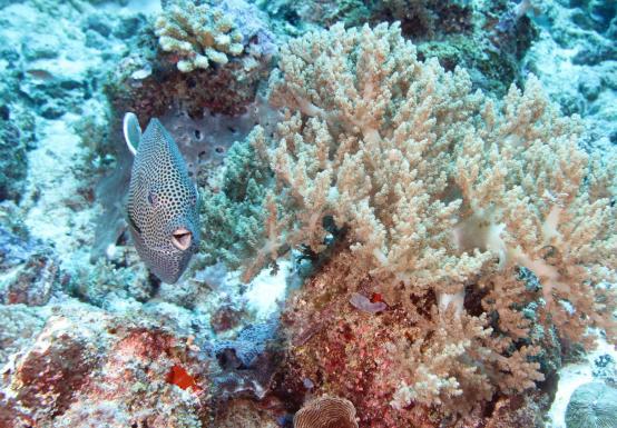 Scuba Diving Tanzania East Africa Mafia Island