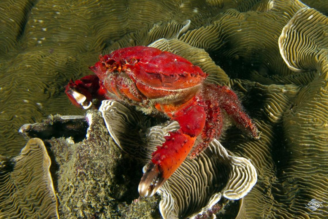 Unknown crab near dar es salaam Tanzania