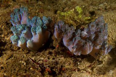 Scuba diving Bongoyo Patches Tanzania