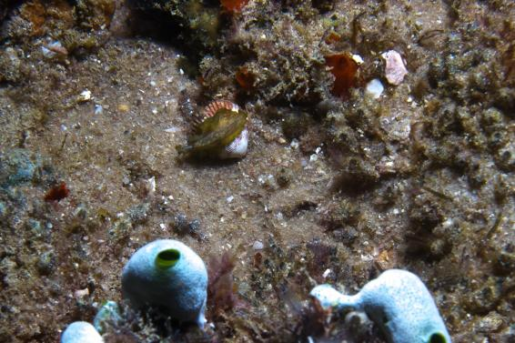 A flatworm species unknown at nudi city
