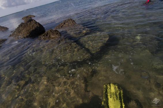Underwater city on low tide