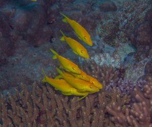 Free Diving Amp Scuba Diving Community