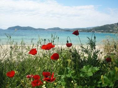 Цветущие маки, пляж Гластрес, Пальо Кавалас, Греция