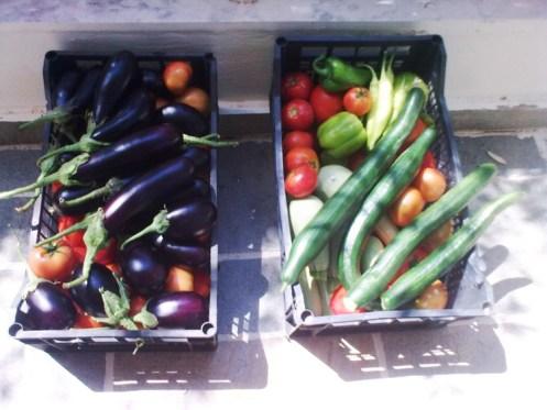 Βιολογικά λαχανικά