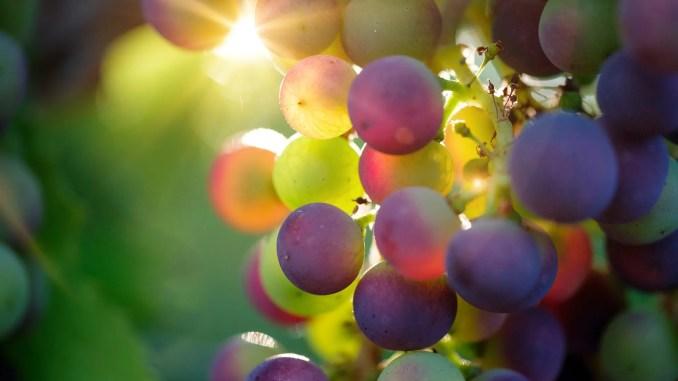- grapes-3550733_1920