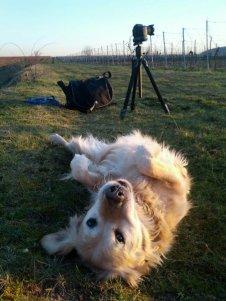 Meine Assistentin Luna :)
