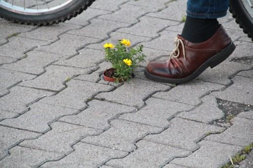 Kein gestelltes Bild. Zeigt mir gleich, wie gefährdet die Blumen sind.