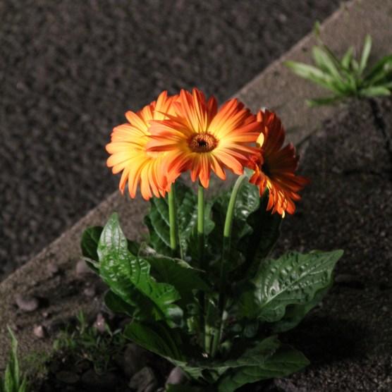 Blumen bei Nacht.