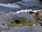 lavar-pa-sten-och-is