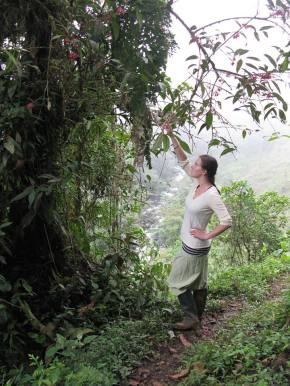 Annie Virnig - The New York Botanical Garden. Integrates ethnobotany and phytochemistry to study the use, management, and antioxidant activity of neotropical blueberries in Colombia