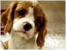 How_Much_is_That_Puppy__by_mubblegum