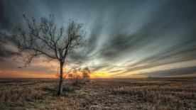 gallery33-awesome_lonely_trees-19