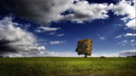 gallery33-awesome_lonely_trees-30