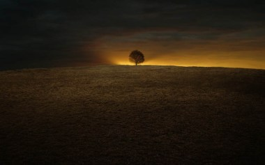 gallery33-awesome_lonely_trees-33