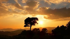 gallery33-awesome_lonely_trees-9