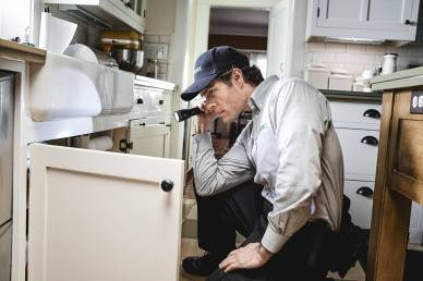 The secret places pests are hiding in your home - pest and termite inspection