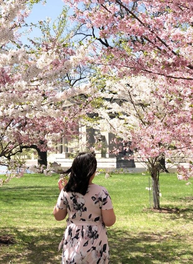 CherryBlossomsChicago13.jpg