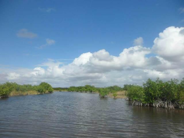 everglades grassland