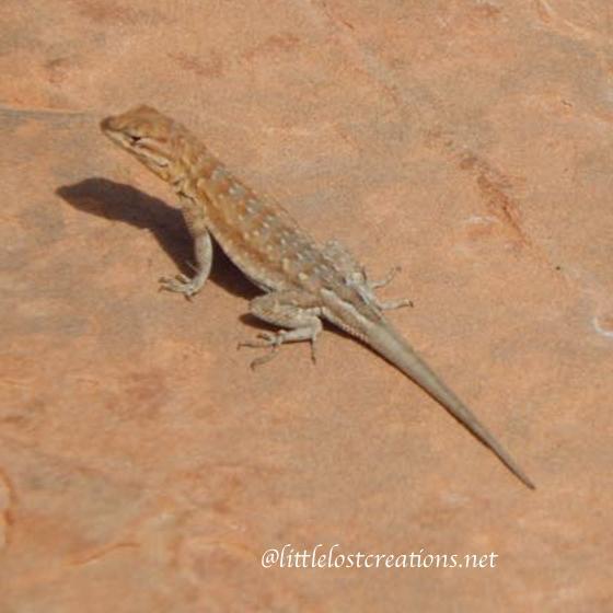 Lizard on the desert.