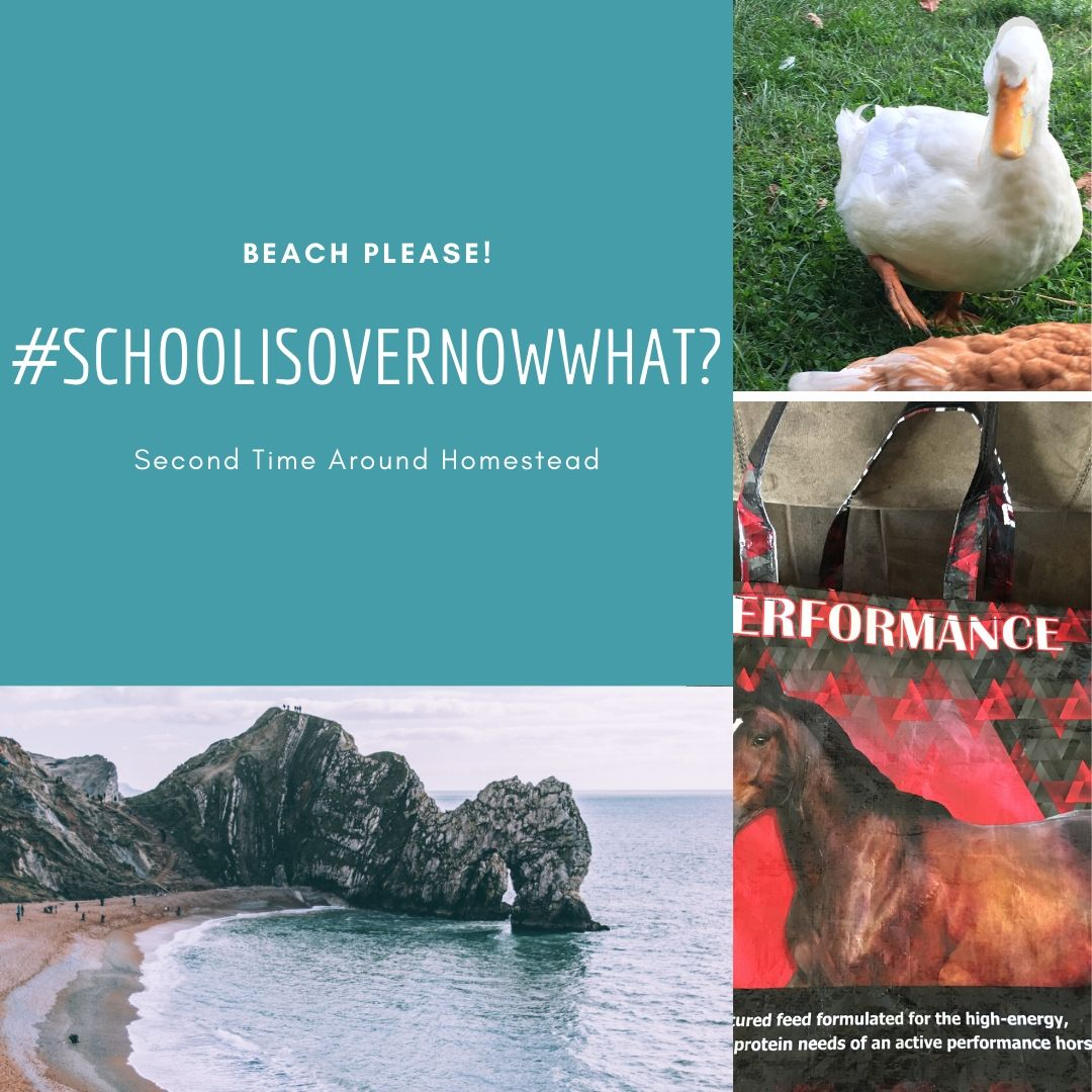 """Collage of a pictures of the beach, a duck, and a market tote with the hashtag """"Schoolisovernowwhat?"""""""