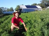 Wes in our beds of fall carrots.