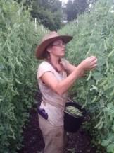 Bryn Picking a Million Peas 2013