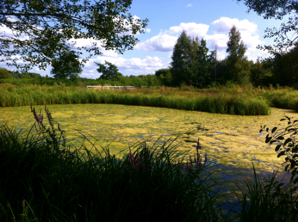 Barnes Wetland Centre in London