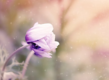 wild flower – Du bist die Quelle