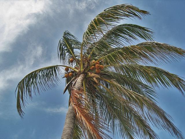 Barbados weather
