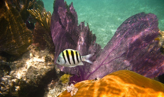 Barbados reef fish