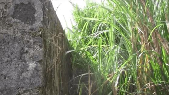 Barbados slave burial ground