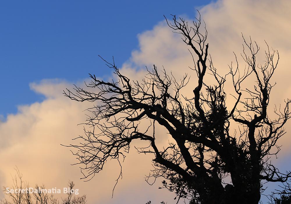 winterdaysinbukovica308