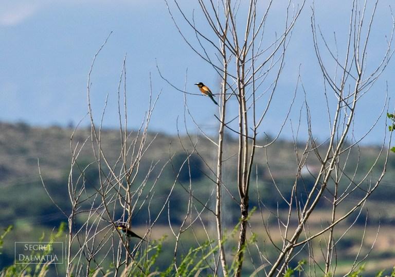 birds003