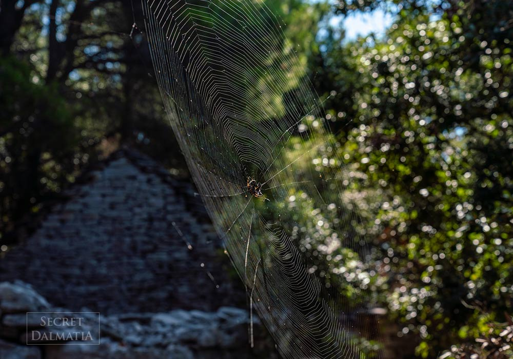 Spider web in Dragodid