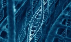 Junk-DNA